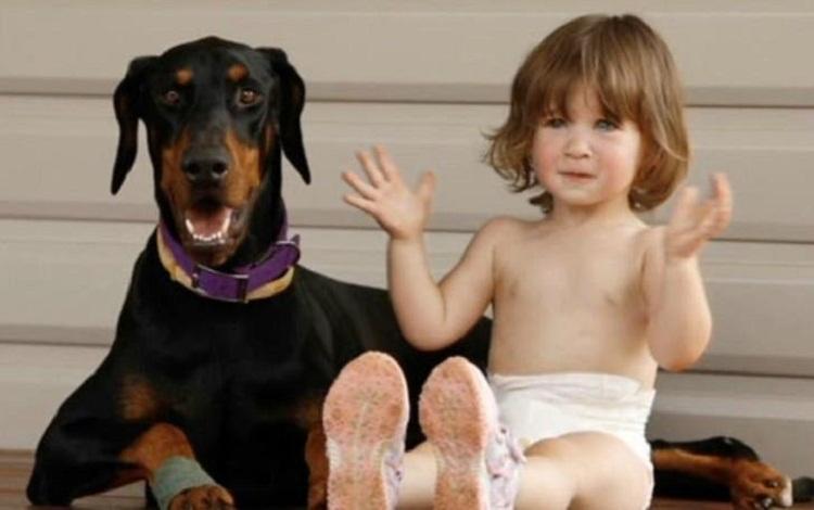 Շունը փրկեց երեխային օձի խայթոցից․Շան ինքնազոհ արարքը ցնցել էր երեխայի ծնողներին