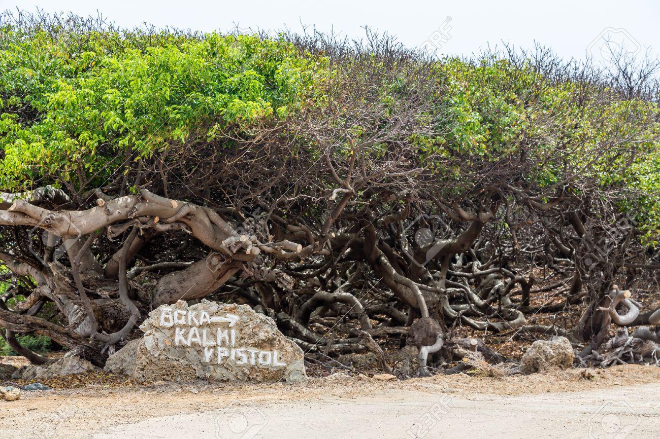 Կան ծառերի տեսակներ, որոնք իրականում նաև կարող են վնաս հասցնել առողջությանը և սպանել։ Տեսանյութ․