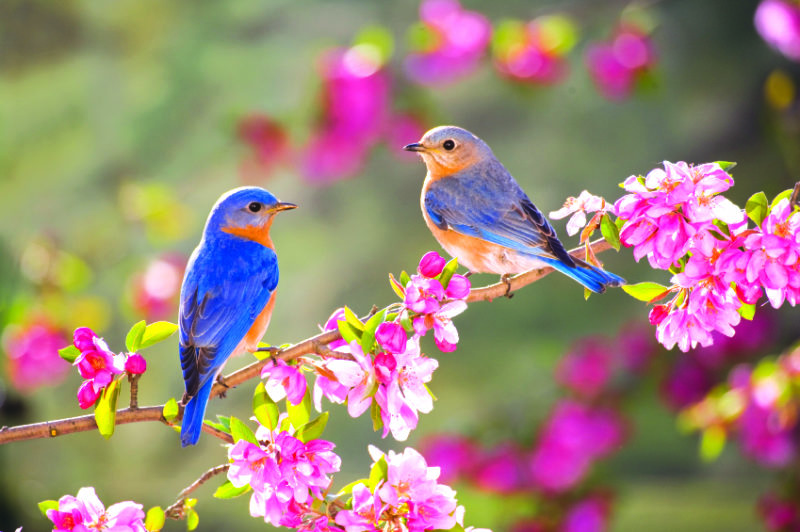 Գարունը բերում է նորություն, թարմություն, նոր կյանքի զգացողություն. Փոփոխենք մեր աշխարհը` ինչպես Գարունն է փոփոխում բնությունը!