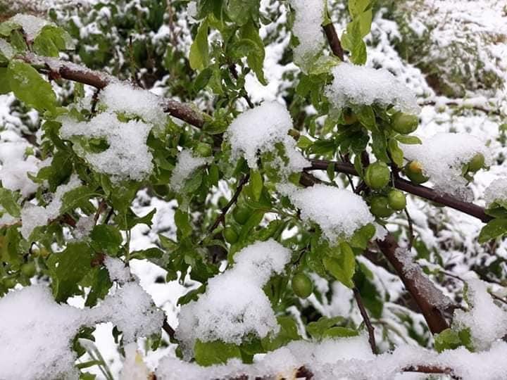 Գագիկ Սուրենյան. Ձյուն է տեղացել նաև Հայաստանի ամենատաք վայրում՝ Մեղրիում