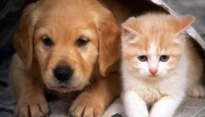 Տնային կենդանիներ, հատկապես շներ պահելը դրական է անդրադառնում տարեցների առողջության վրա