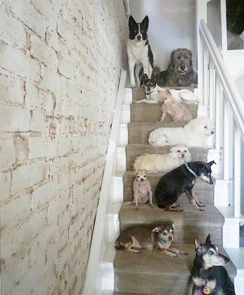 Տղամարդը ապաստարաններից վերցնում է ծեր շներին, որոնք չեն կարողանում նոր տուն գտնել