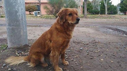 Արգենտինական Խատիկոն՝ շունը ոստիկանության մոտ սպասում է տիրոջը, որին ձերբակալել են