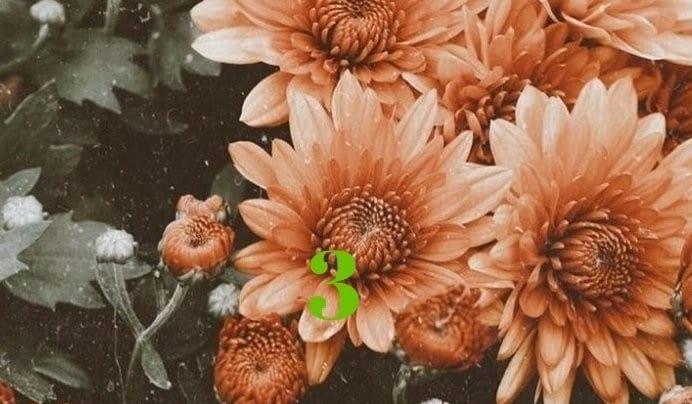Թեստ. Ընտրեք ծաղիկներից մեկը և իմացեք, թե ինչպիսի կին եք դուք