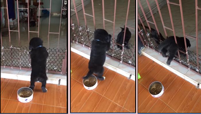 Կատու և շան ձագ՝ հատուկ գործակալները գործողության մեջ