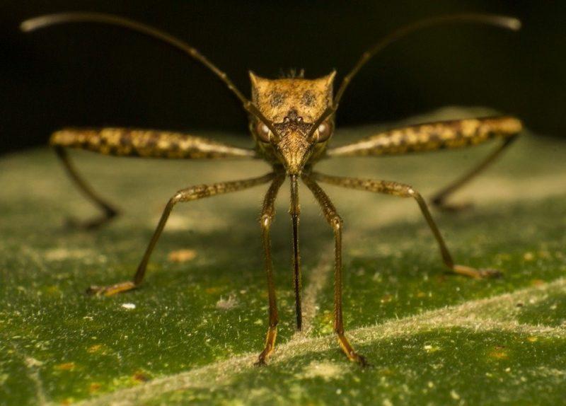 Գիտնականները պարզել են, թե ում արյունն է  գրավում  մոծակներին ...