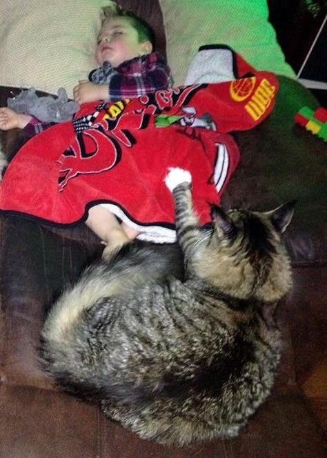 Աշխարհում ամենամեծ ՛՛մեյն կուն՛՛ կատուն հսկում է իր մարդ եղբորը և ոչ միայն.........