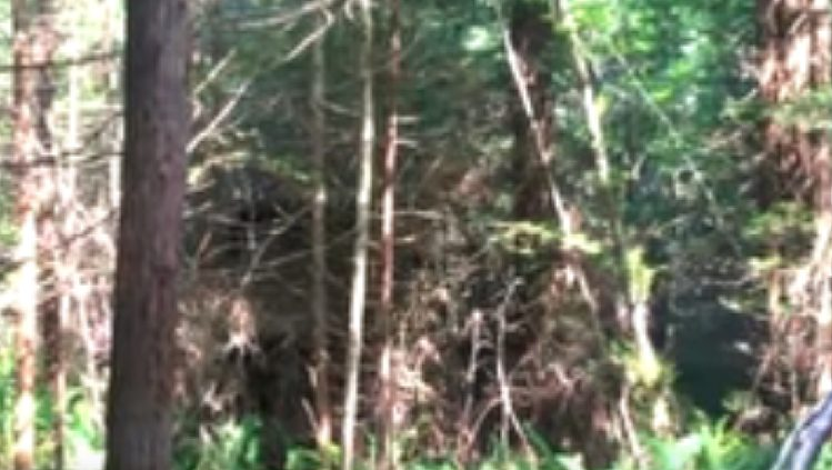 Անտառում  անտառապահը մի խորհրդավոր խրճիթ գտավ, երբ նա ներս մտավ, նրան մեծ  անակնկալ էր սպասվում