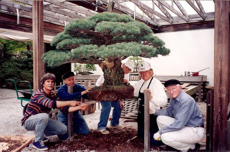 Ահա թե ինչպիսի տեսք ունի 390 տարեկան ծառը, որը վերապրել է   Հիրոսիմայի ռմբակոծությունը