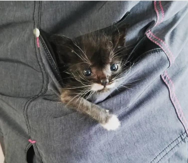 Փոքրիկ՝ 100 գրամանոց կատվիկը մնացել էր մենակ, բայց ահա թե ինչ պատահեց...