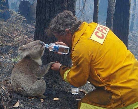 Այսպիսին են իրական սերը, բարությունը եւ կարեկցանքը