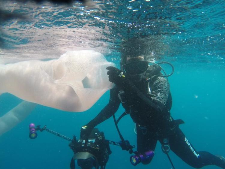 """Նոր Զելանդիայի ափերի մոտ երկու ջրասուզակներ բախվել են 8 մետրանոց ծովային """"որդ"""" - ին"""