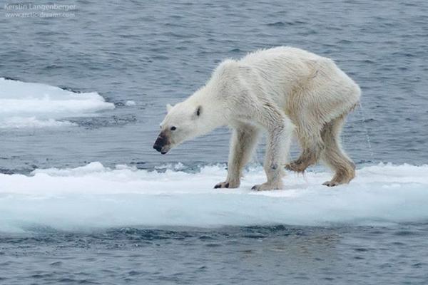 Արդյո՞ք մենք իրավունք ունենք վտանգել կենդանիների կյանքը, այս նկարները այդ են փաստում