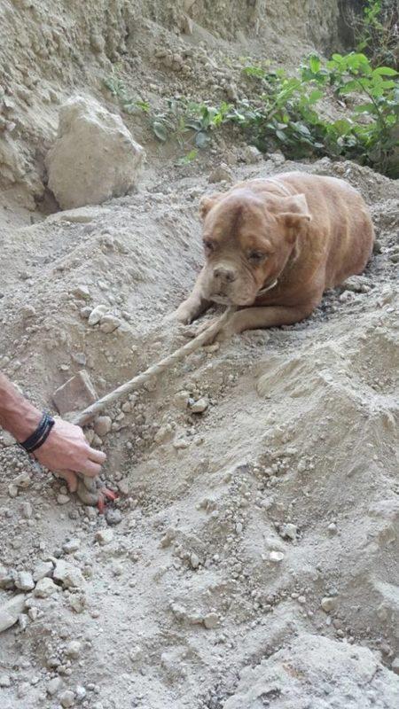 Տղամարդը դուրս էր եկել զբոսանքի, նա սարսափելի բացահայտում արեց, այնտեղ շուն կար...անպայման կարդալ է պետք