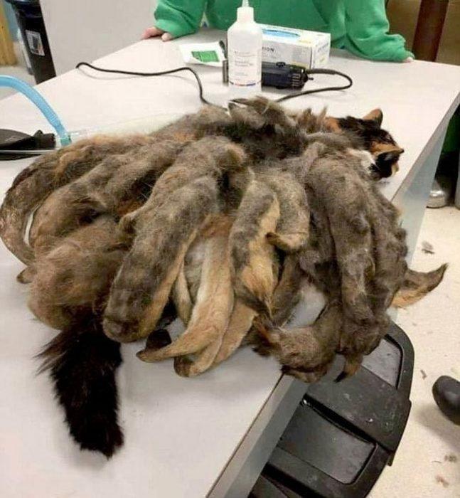 Փիթսբուրգ քաղաքում կատու հիշեցնող արարած էր հայտնաբերվել