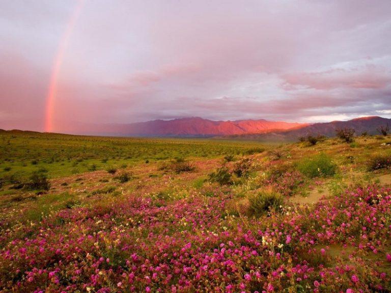 Ոչ մի ֆոտոշոփի կաթիլ. 15 ֆոտոապացույց , որ բնության ֆանտազիայի հետ ամեն ինչ  կարգին է