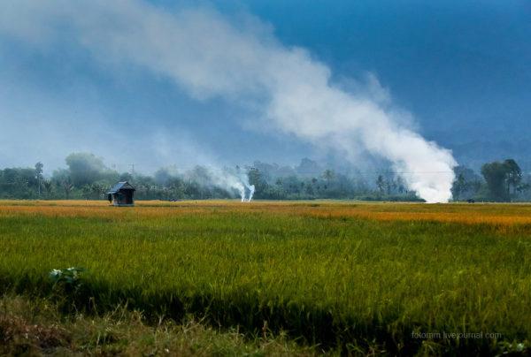 Ճանապարհորդություն Ինդոնեզիայով, տեսե՞լ եք նման հրաշքներ երբևէ