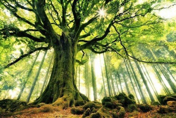 Ամենասիրուն ծառերն  աշխարհում