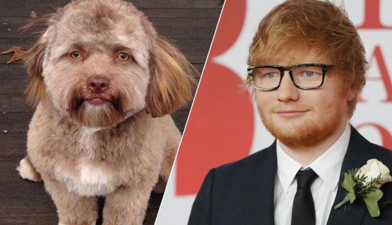 Մարդու դեմքով շունը վախեցրել է համացանցը