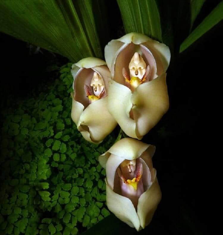 Անհավատալի ծաղիկներ, որոնք ընդհանրապես նման չեն բույսերի