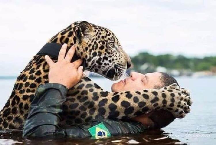 Յագուարը խեղդվում էր ջրի հոսանքից , հանկարծ նա իր կողքին մարդ տեսավ