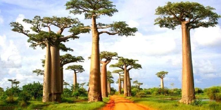 Այս անտառները ճանաչվել են ամենագեղեցիկը աշխարհում.  իսկ դուք որտե՞ղ կուզենայիք հայտնվել