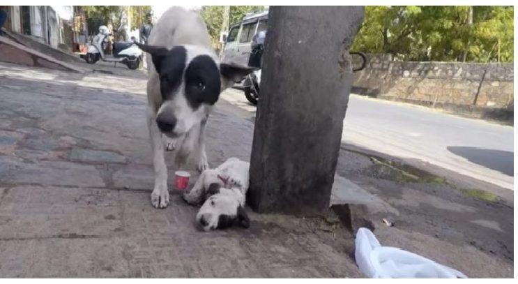 Այս խեղճ շունը խնդրում էր մարդկանց օգնել իր ձագուկին