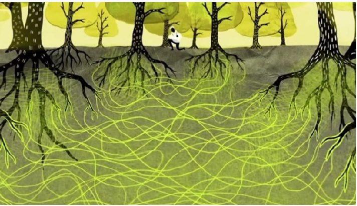 Պատկերացնում եք, պարզվում է  ծառերը կարող են գրկել միմյանց, նույնիսկ խոսել, կարդացեք  այդ մասին