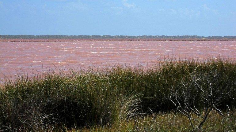 Կպատկերացնեի՞ք այսպիսի երևույթ. վարդագույն ջրերով Հիլլեր լիճը