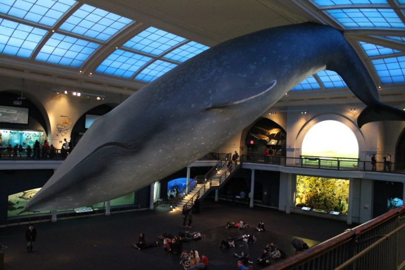 10 թանգարաններ, որտեղ կարելի է գիշերել