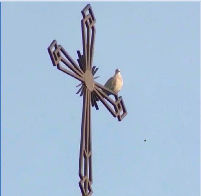«Սա լավ նշան է». Մայր Աթոռում աղավնին աղոթքի ողջ ընթացքում նստել էր խաչի վրա. տեսանյութ