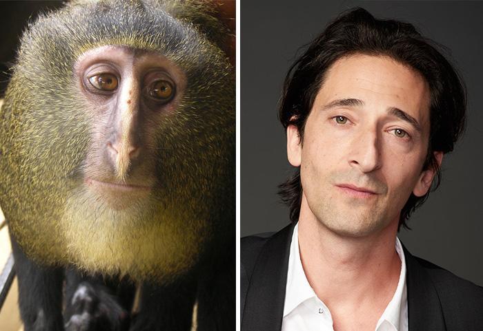 20 կենդանիներ, որոնք նման են հայտնի մարդկանց այնքան, որ նույնիսկ մի փոքր կարող են նրանց շփոթվել