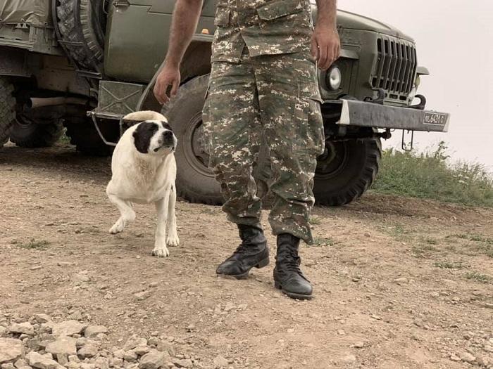 Հայ զինվորները ծшծկել են շшնն իրենց հագուստով, որ չմրuի. հուզիչ տեսարան